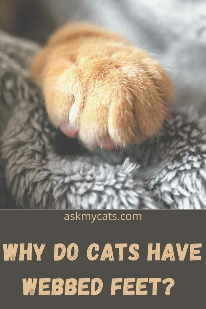 Why Do Cats Have Webbed Feet?
