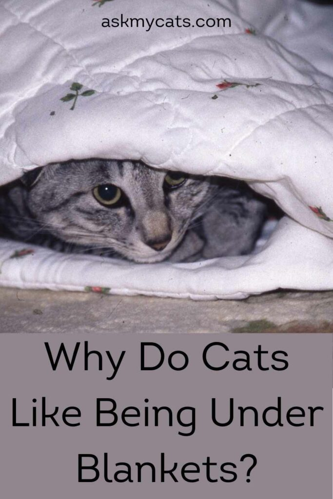 Why Do Cats Like Being Under Blankets?