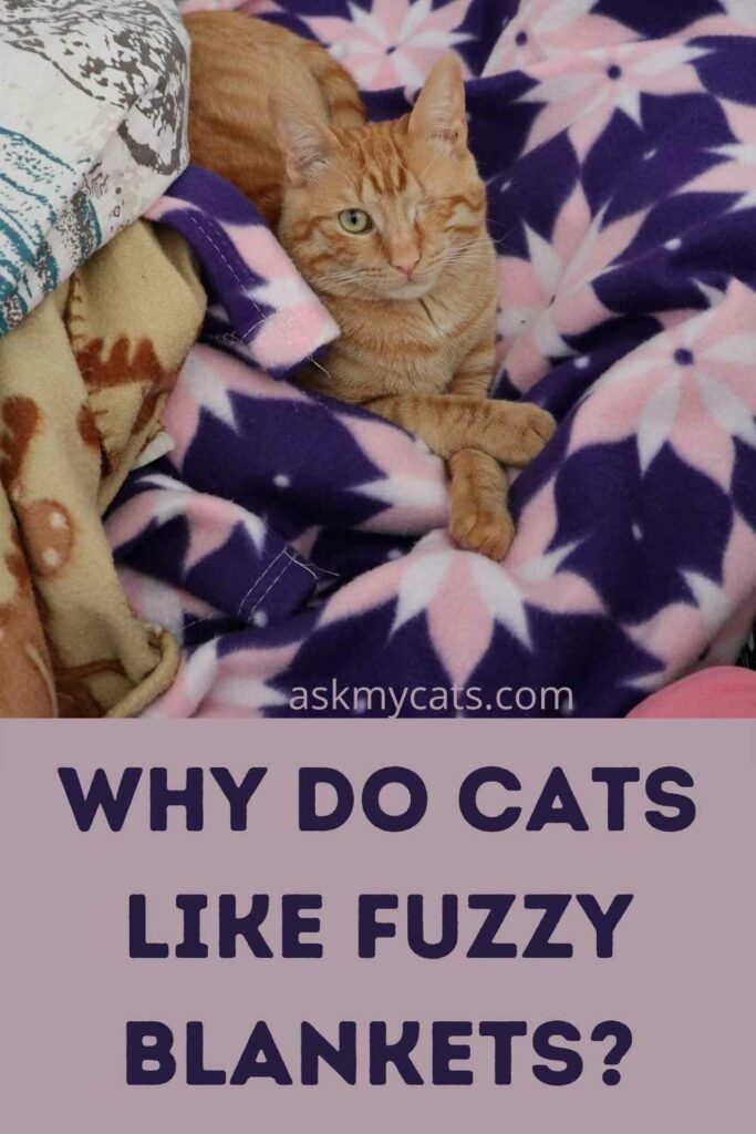 Why Do Cats Like Fuzzy Blankets?