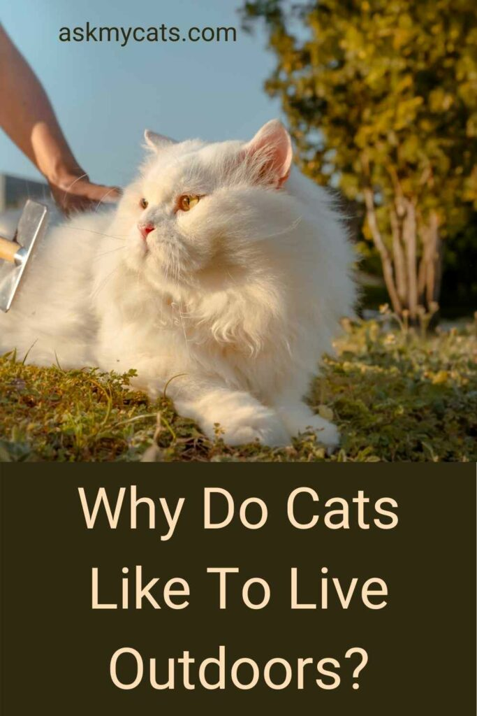 Why Do Cats Like To Live Outdoors?