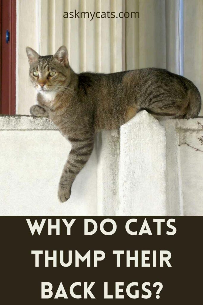 Why Do Cats Thump Their Back Legs?