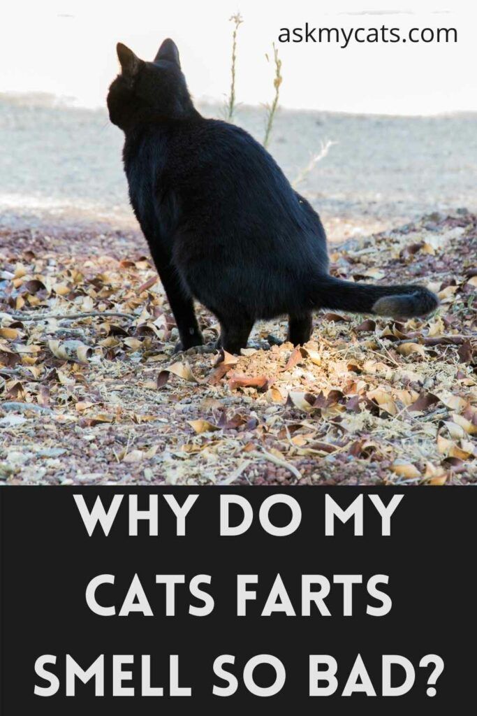 Why Do My Cats Farts Smell So Bad?