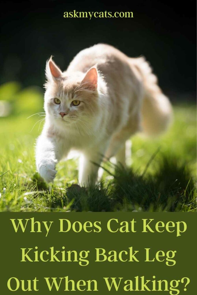 Why Does Cat Keep Kicking Back Leg Out When Walking?