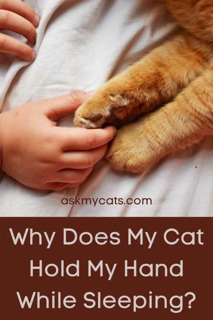Why Does My Cat Hold My Hand While Sleeping?