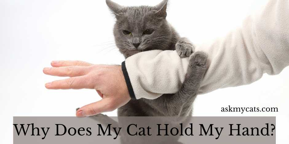 Why Does My Cat Hold My Hand