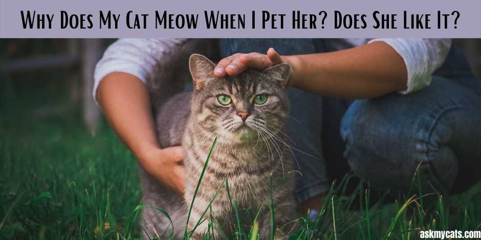 Why Does My Cat Meow When I Pet Her Does She Like It