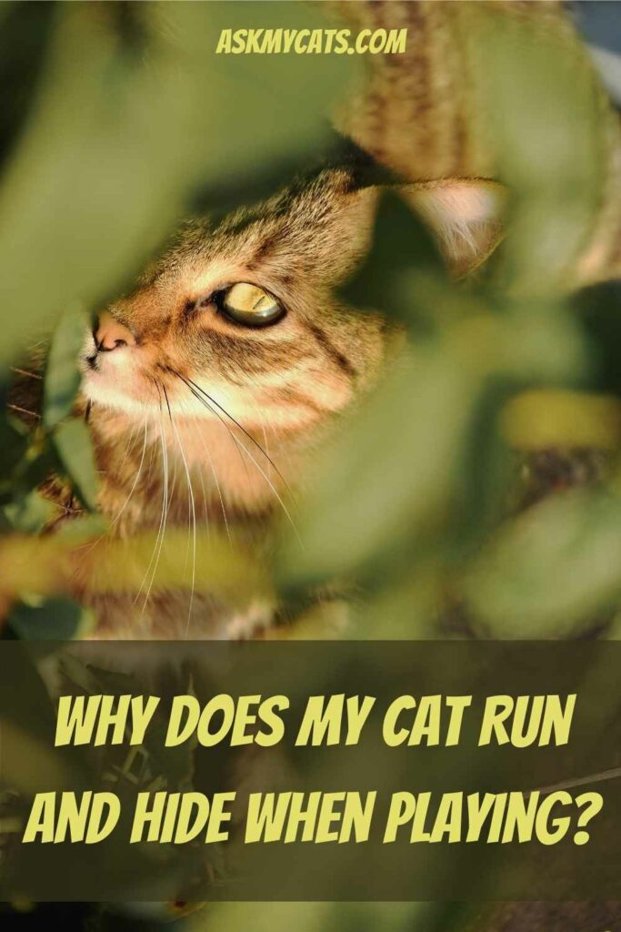 Why Does My Cat Run and Hide When Playing?