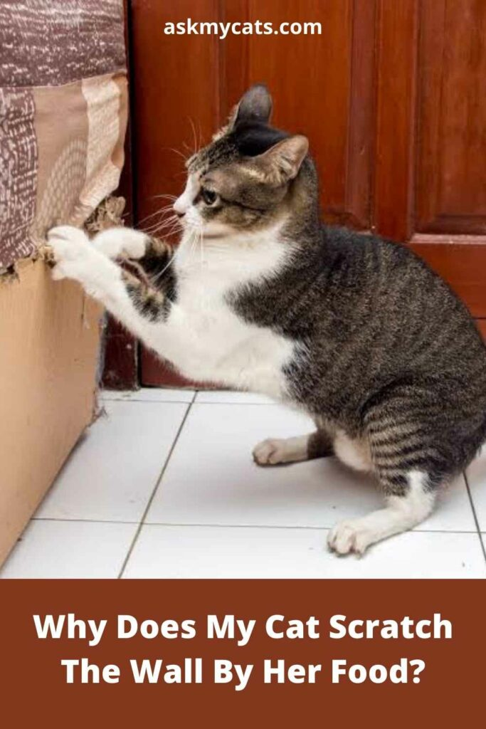 Why Does My Cat Scratch The Wall By Her Food?
