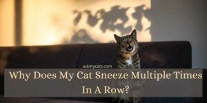Why Does My Cat Sneeze Multiple Times In A Row?