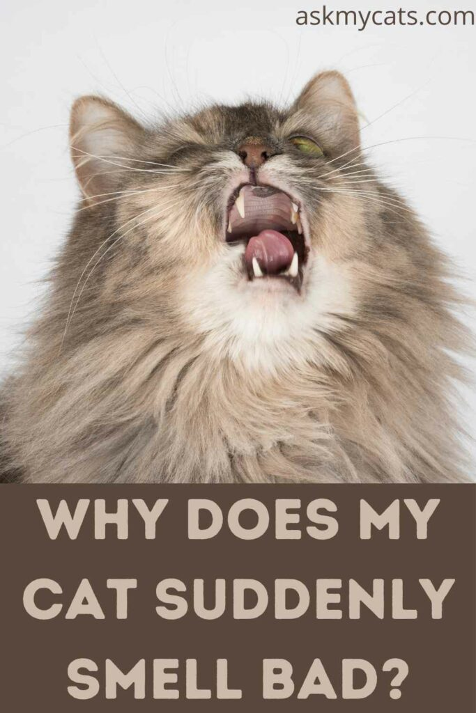 Why Does My Cat Suddenly Smell Bad?