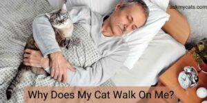 Why Does My Cat Walk On Me? Cat Behavior Explained