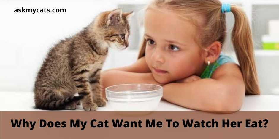 Why Does My Cat Want Me To Watch Her Eat?