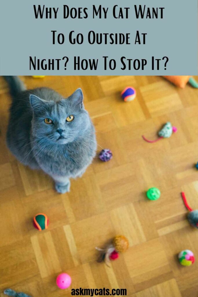 Why Does My Cat Want To Go Outside At Night? How To Stop It?