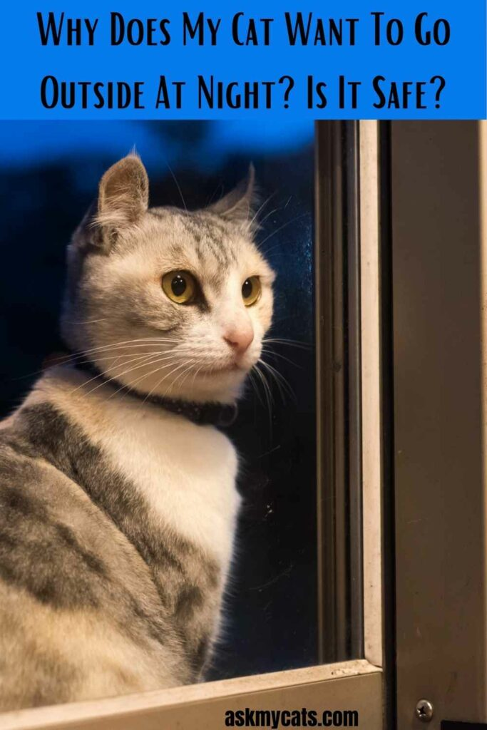 Why Does My Cat Want To Go Outside At Night?