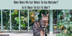Why Does My Cat Want To Go Outside? Is It Okay To Let It Out?