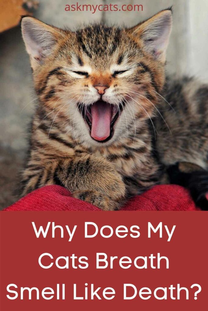 Why Does My Cats Breath Smell Like Death?