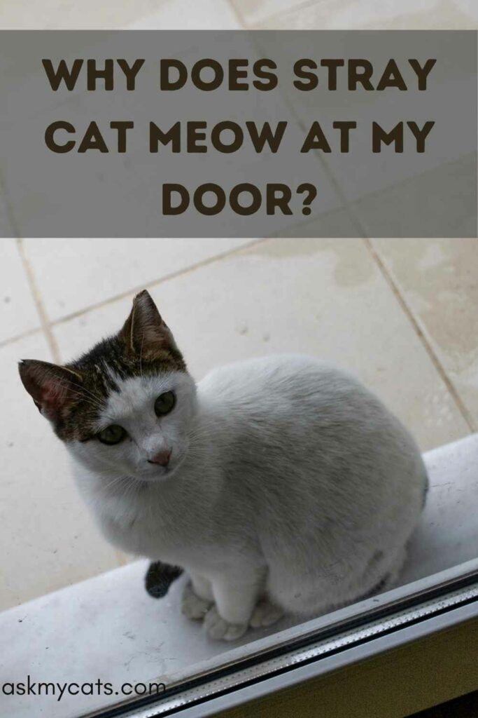 Why Does Stray Cat Meow At My Door?