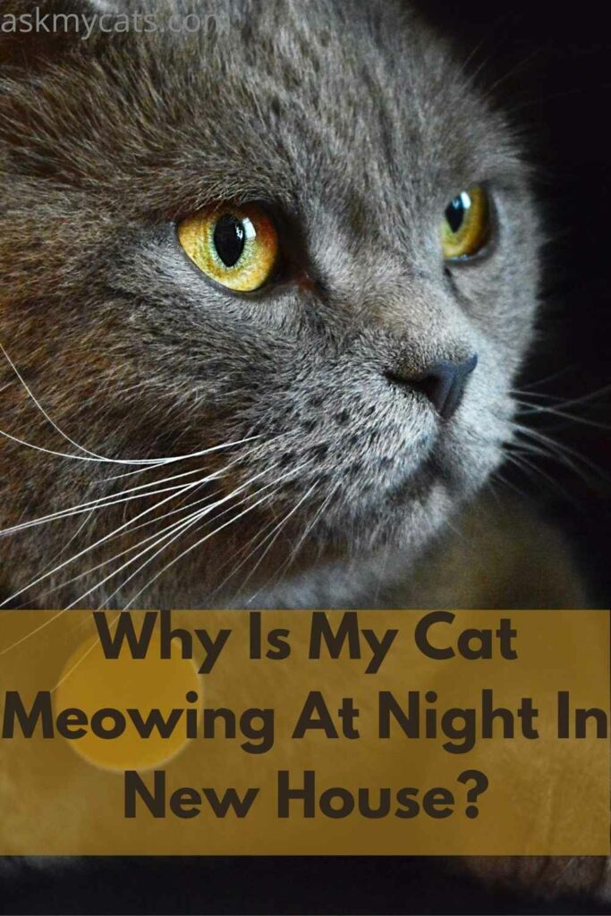 Why Is My Cat Meowing At Night In New House?
