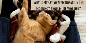Why Is My Cat So Affectionate In The Morning? Should I Be Worried?