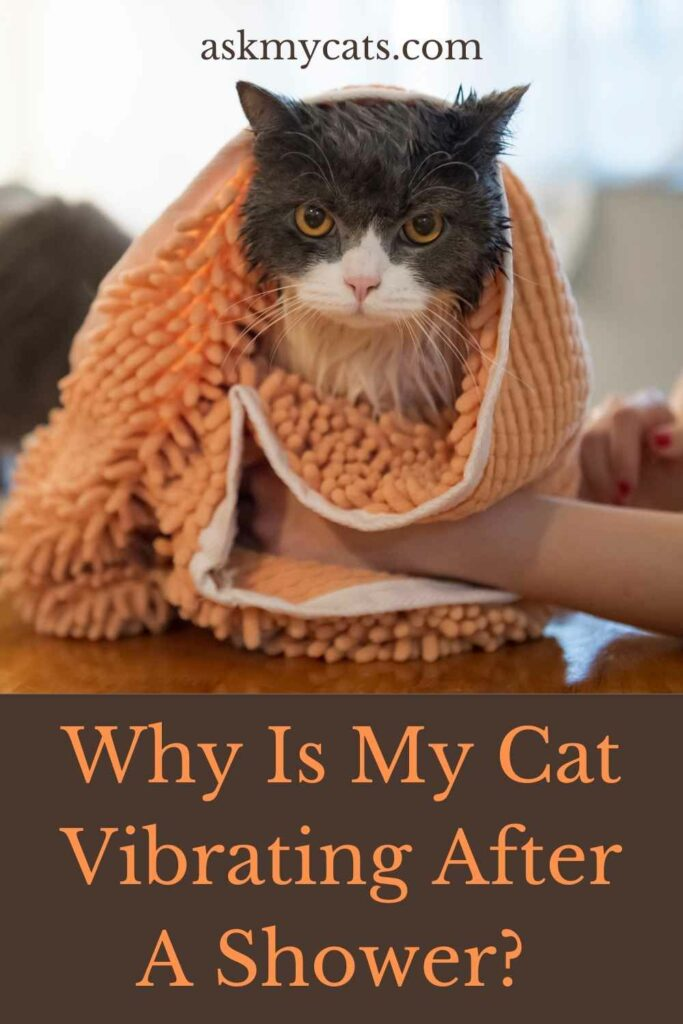 Why Is My Cat Vibrating After A Shower?