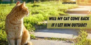 Will My Cat Come Back If I Let Him Outside? Will It Be a Risk?