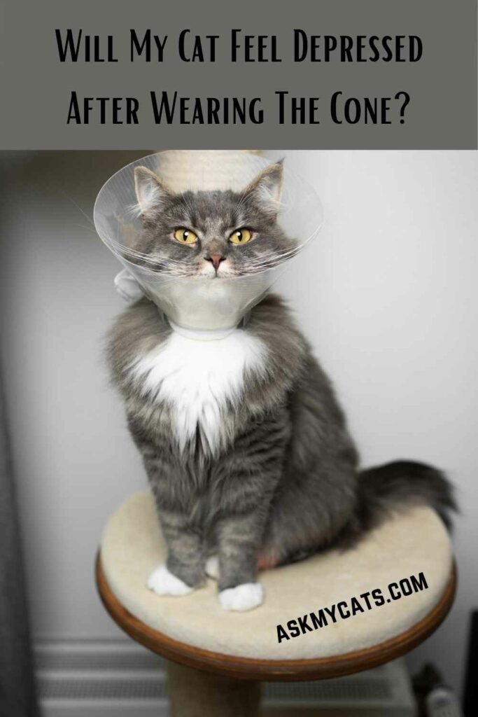 Will My Cat Feel Depressed After Wearing The Cone?