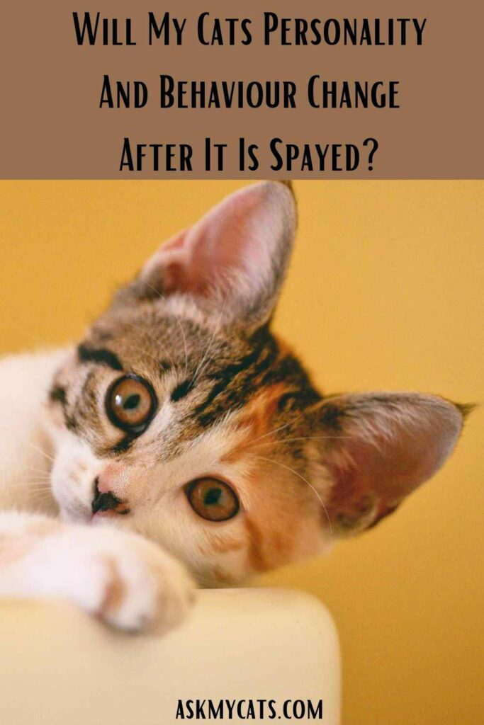 Will My Cats Personality And Behaviour Change After It Is Spayed?