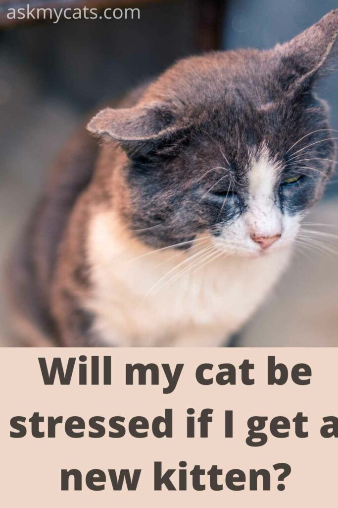 will my cat be stressed if get a new kitten?