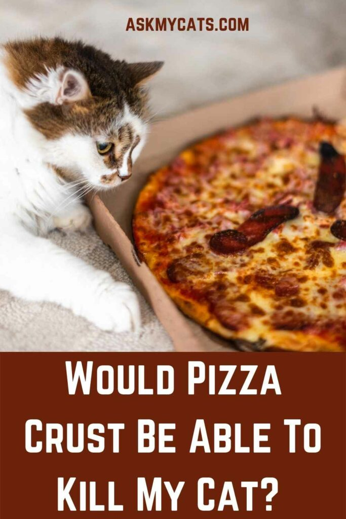Would Pizza Crust Be Able To Kill My Cat?