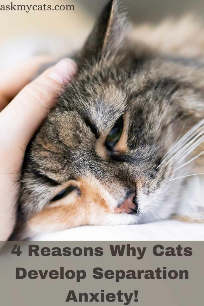 4 Reasons Why Cats Develop Separation Anxiety!