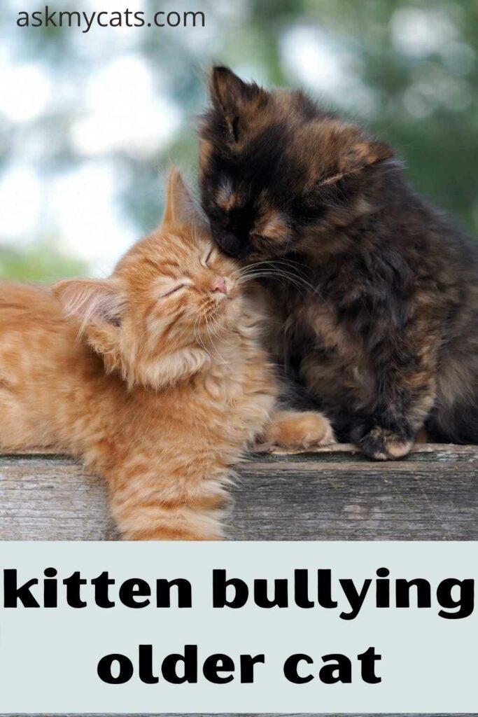 kitten bullying older cat
