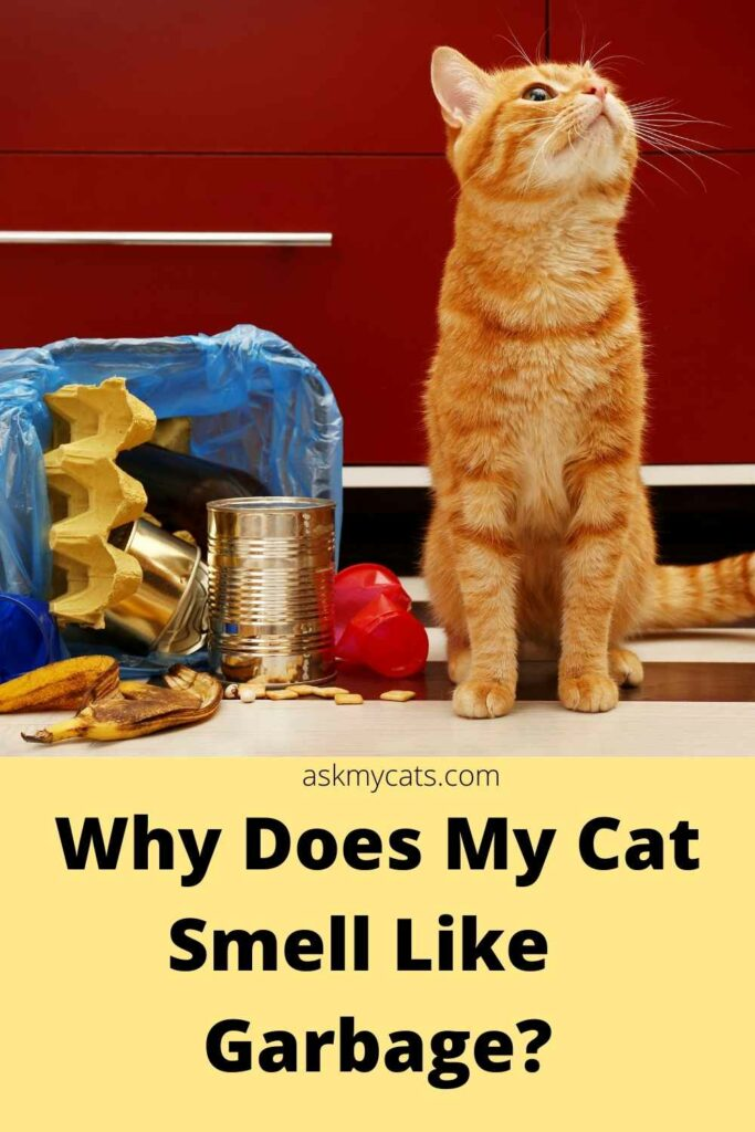 why does my cat smell like garbage?