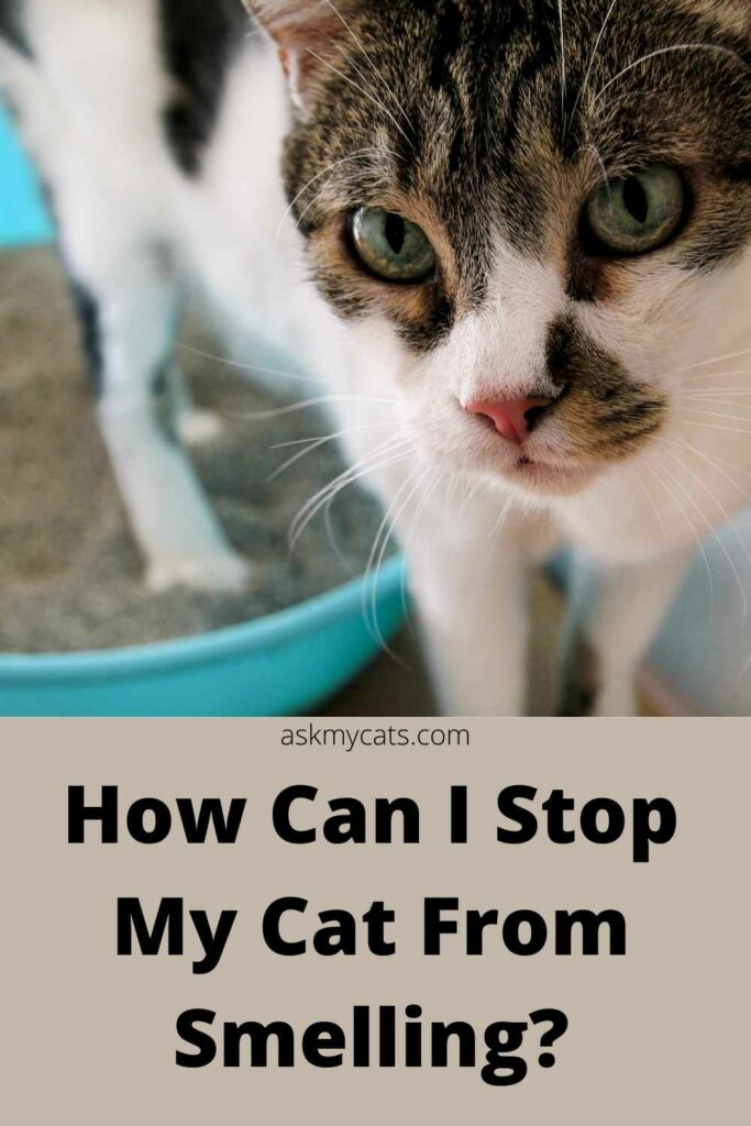 How can i stop my cat from smelling?