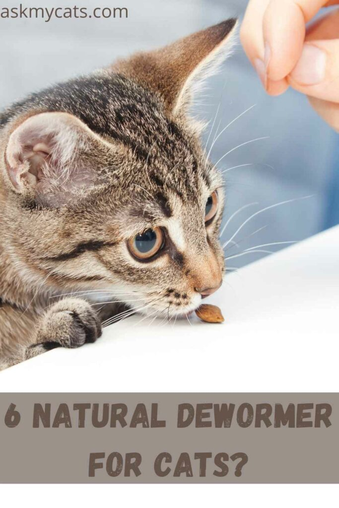 6 Natural Dewormer For Cats?