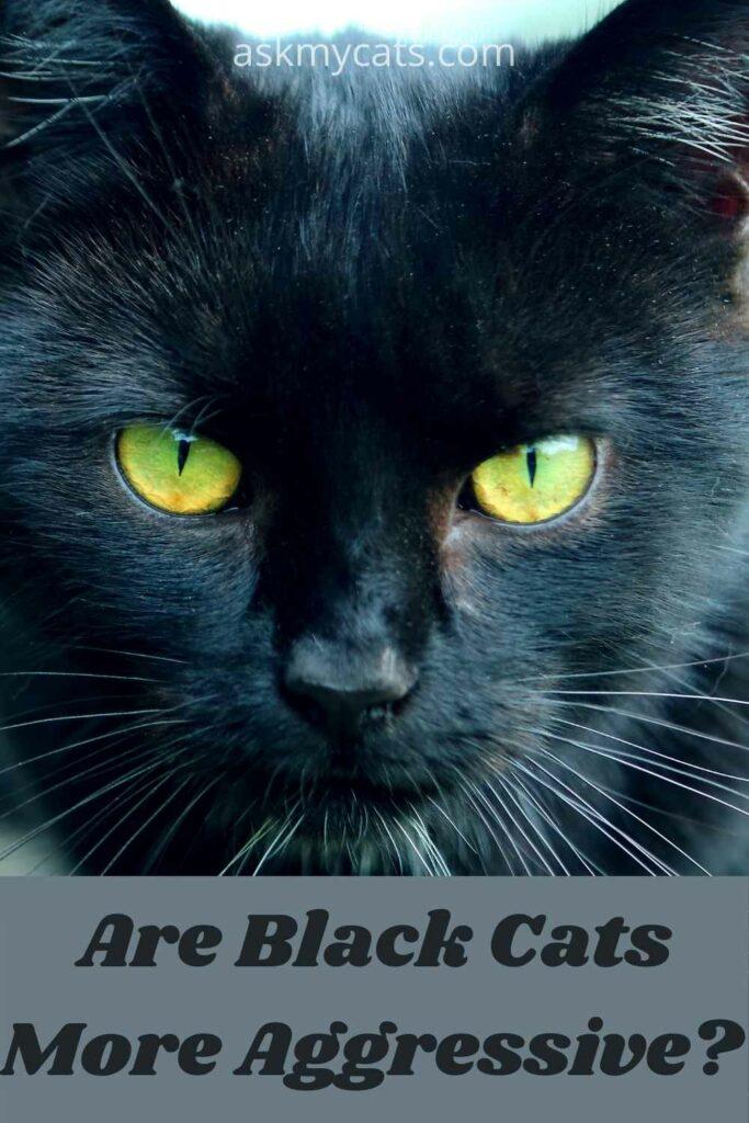 are black cats more agressive