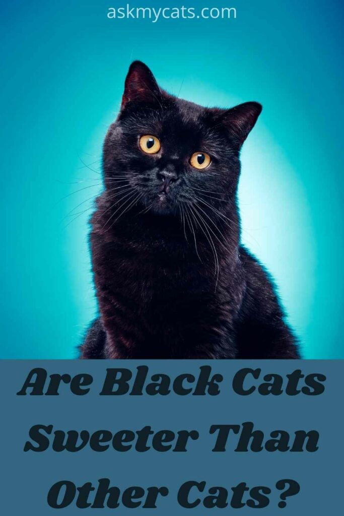 Are Black Cats Sweeter Than Other Cats