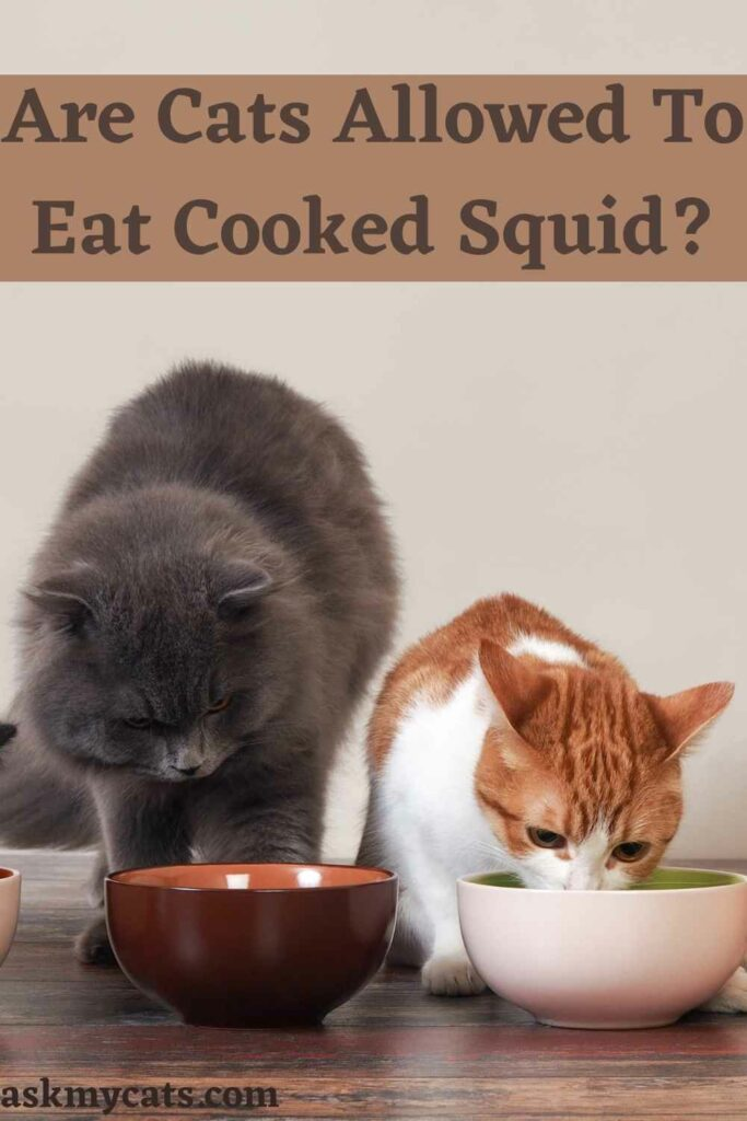 Are Cats Allowed To Eat Cooked Squid?