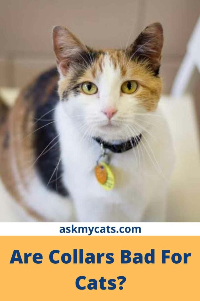Are Collars Bad For Cats?