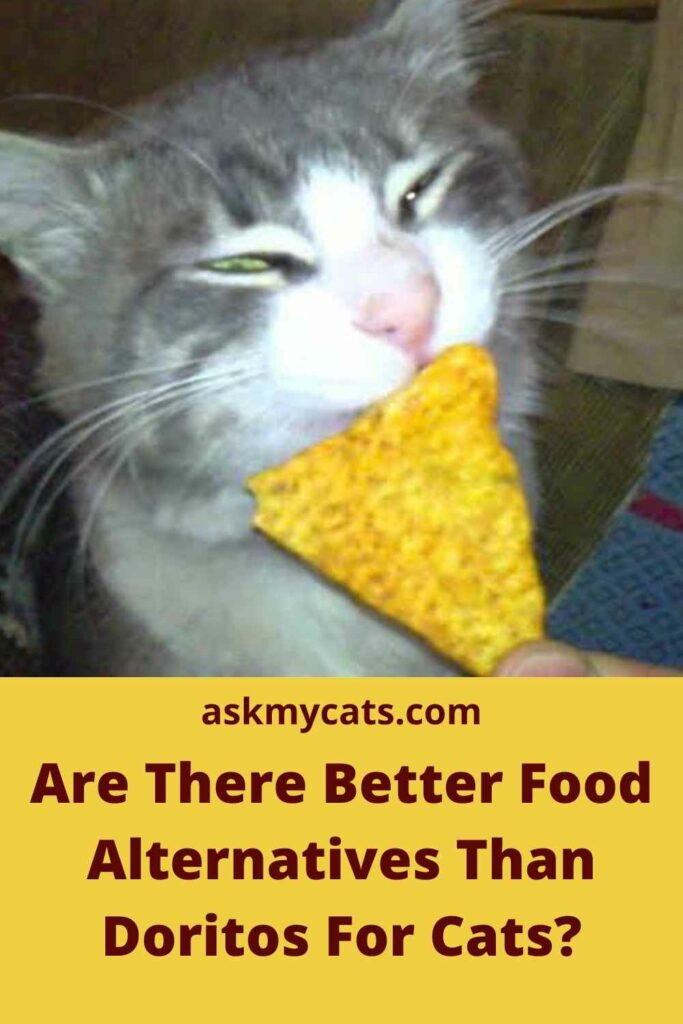 Are There Better Food Alternatives Than Doritos For Cats?