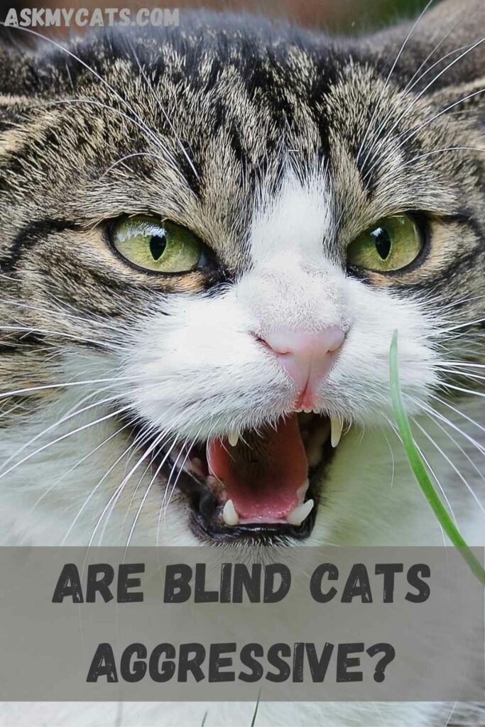 Are blind cats aggressive?