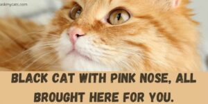 Black Cat With Pink Nose, All Brought Here For You