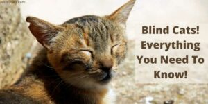 Blind Cats! Everything You Need To Know!