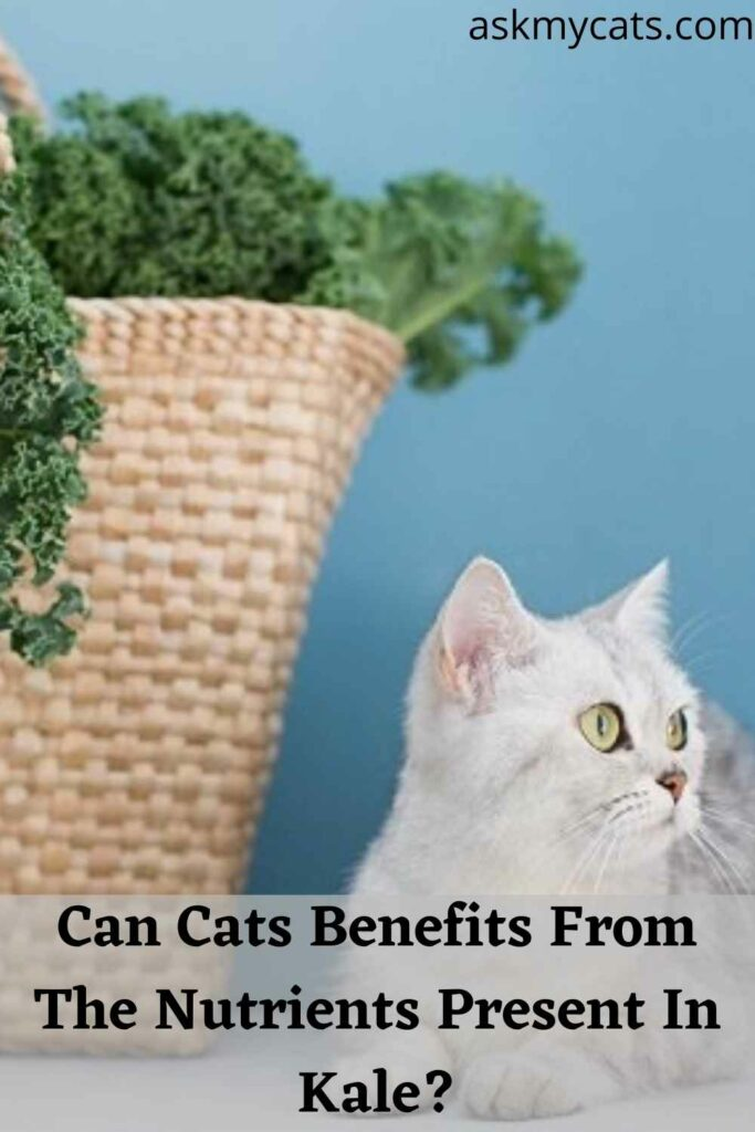 Can Cats Benefits From The Nutrients Present In Kale?