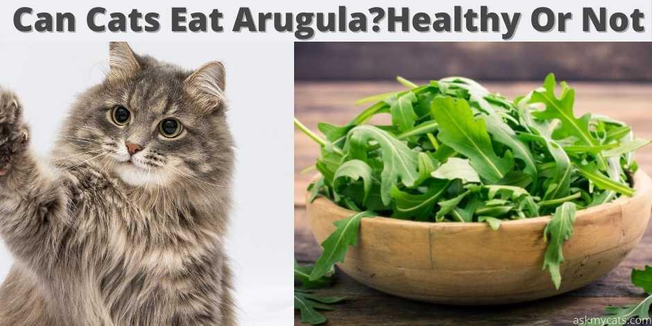 can cats eat arugula?