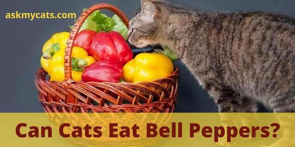 Can Cats Eat Bell Peppers?