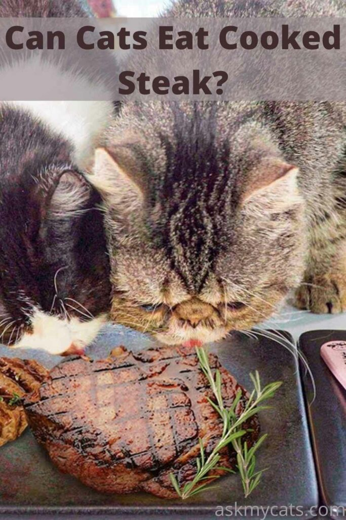 Can Cats Eat Cooked Steak?