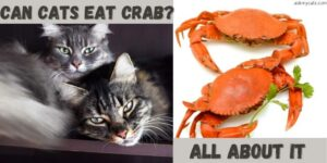 Can Cats Eat Crab? Crab Meat Raw Or Cooked?