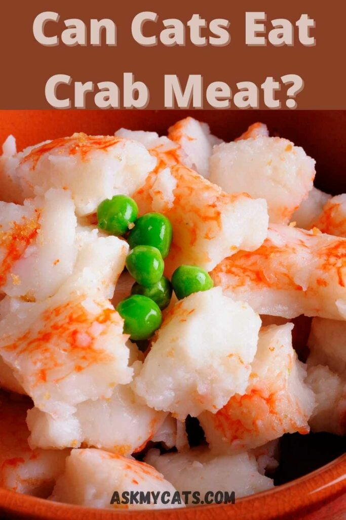 can cats eat crab meat?