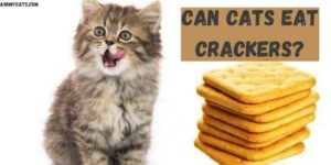Can Cats Eat Crackers? Do Cats Like Crackers?