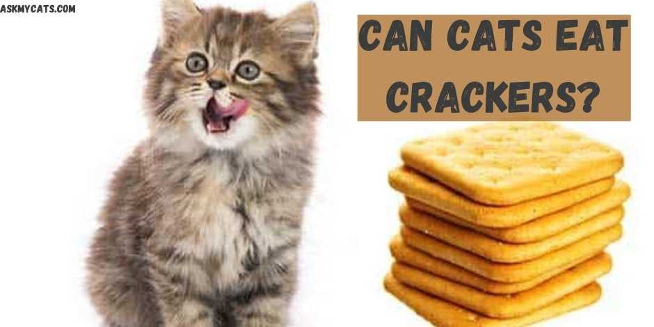 Can Cats Eat Crackers?